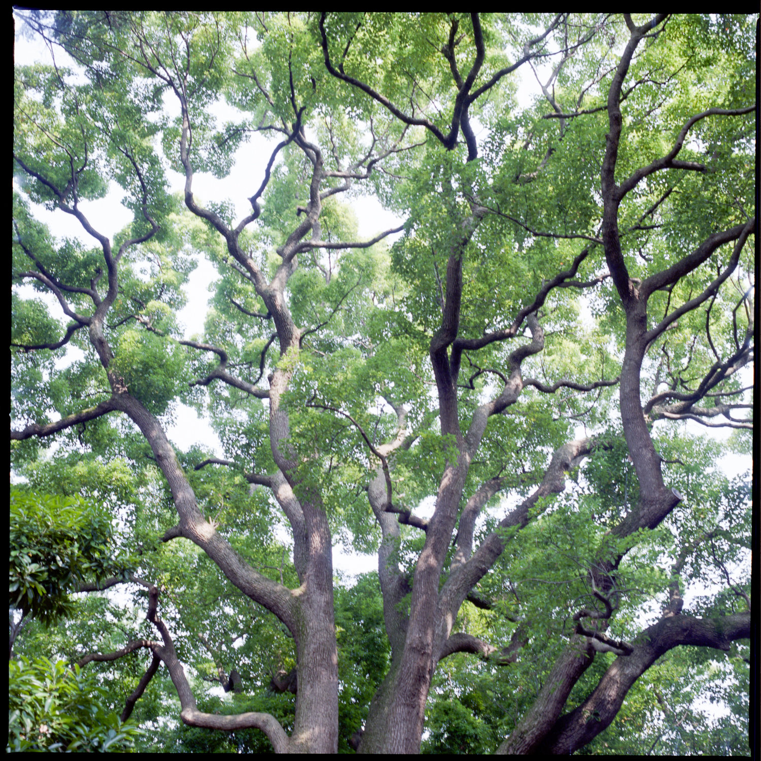 forest_05Jul2015_004